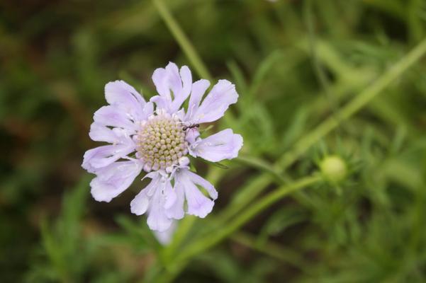 八月の花と実がんサバイバークラブ 8月寄稿癒し憩い画像