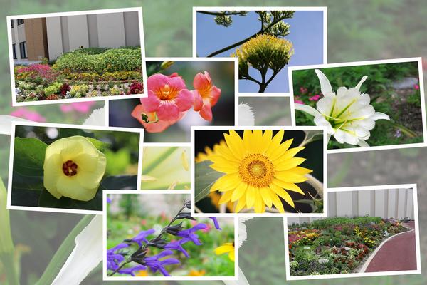 九州がんセンターの7月の花と実たち その Ii 癒し憩い画像