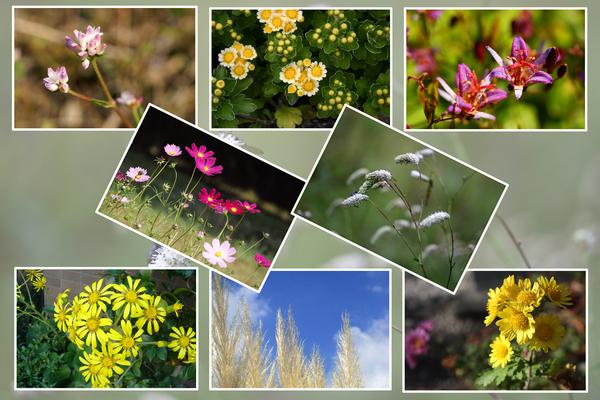 秋に咲いた花たち